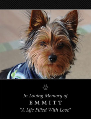 Are Pet Sympathy Cards Absurd?
